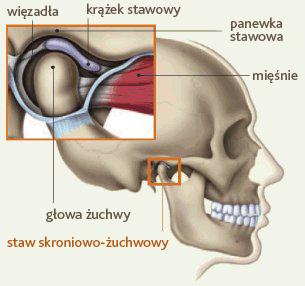 tmj_anatomy